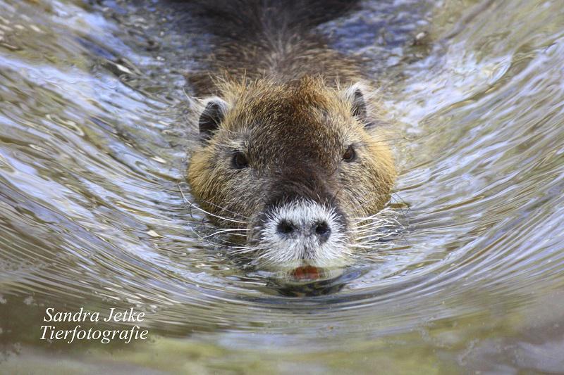 Foto der Galerie: Tiere