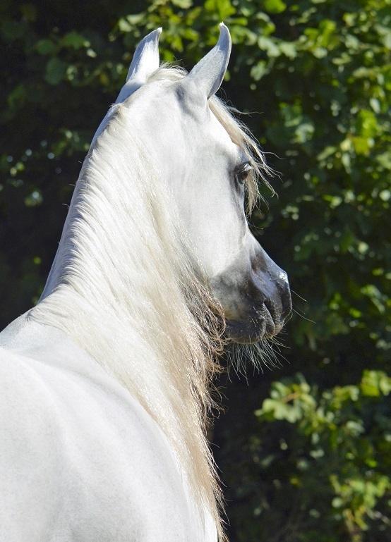 Foto der Galerie: Pferdepostkarten