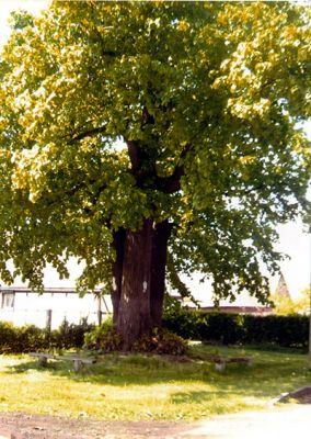 'Dreibaum'