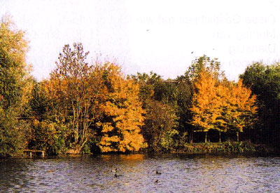 Der Schermcker Mühlenteich erstrahlt in der Oktobersonne.