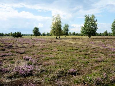 Heidelandschaft bei Hohenleipisch