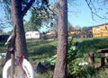 Idylle auf dem Heidehof