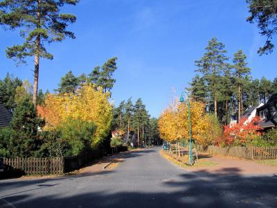 Herbst in Fichtenwalde