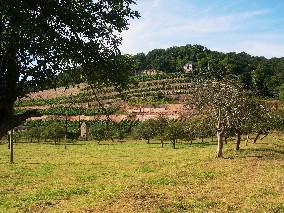 Dechantenberg in Goseck / vineyard in Goseck