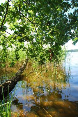 Erholung in wasser- und waldreicher Natur