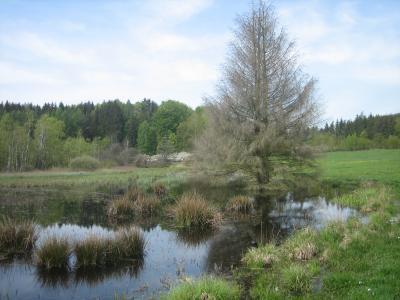 Naturschutzgebiet Stedtlinger Moor