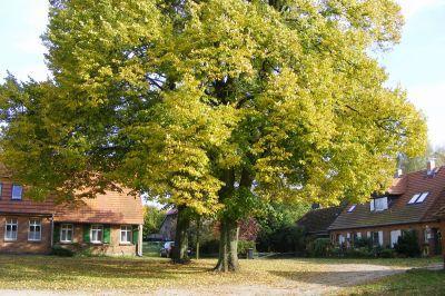 Kuckucksberg