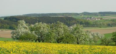 Blühende Landschaft (Foto von Gerda Grimbs)