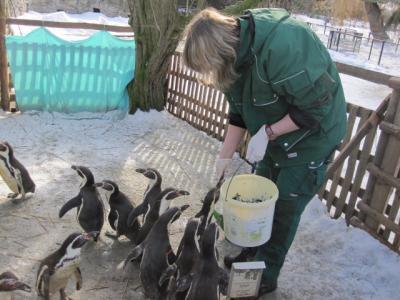 Foto zur Meldung: Zooschule Hoyerswerda