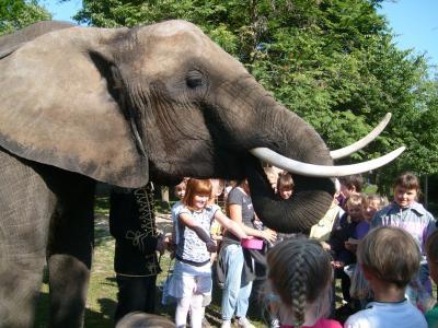 Foto zur Meldung: Ein Elefant zum Frühstück