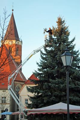 Foto zur Meldung: 13 Meter hoche Blaufichte schmückt den Calauer Marktplatz