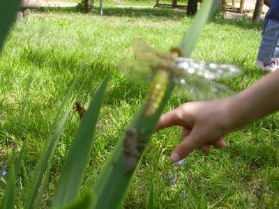 Foto zur Meldung: Überraschung im Schulgarten