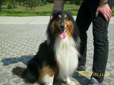 Foto zur Meldung: Hund in Werchow aufgefunden