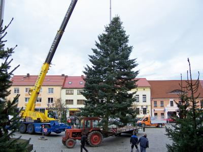 Foto zur Meldung: Weihnachtsbaum auf dem Calauer Marktplatz