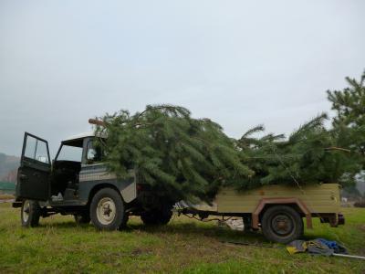 Foto zur Meldung: Die Weihnachtsbäume sind aufgestellt!