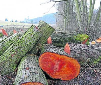 Foto zur Meldung: Ortsgemeinde: Burgschwalbach erhöht  die Steuerhebesätze