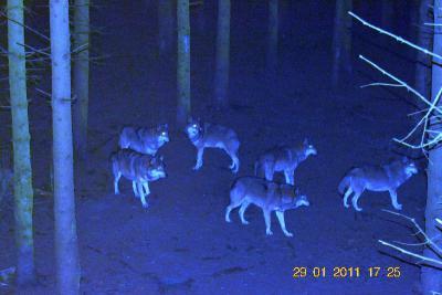 Foto zu Meldung: Die mit den Wölfen heulen und bei den Fischen essen