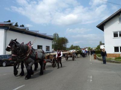 Foto zur Meldung: Dorfverein Hagengrub stellte zum 2. Mal einen Maibaum auf