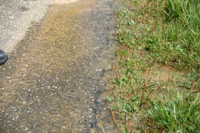 Foto zur Meldung: Wasserrohrbruch in Weichs