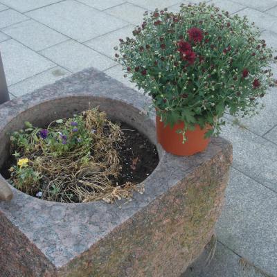 Foto zur Meldung: Neubepflanzung der Blumenkübel
