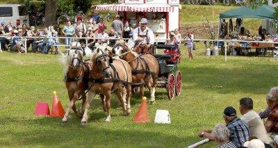 Vorschaubild zur Meldung: Pferdesport von A bis M