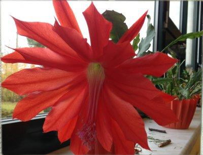Foto zur Meldung: So schön blüht es in unseren Klassenzimmern!