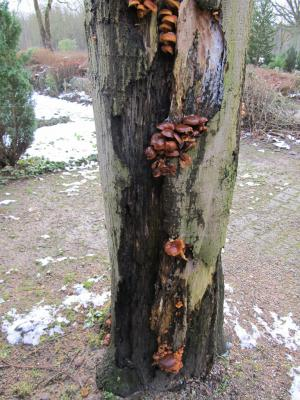 Vorschaubild zur Meldung: Bäume müssen gepflegt werden