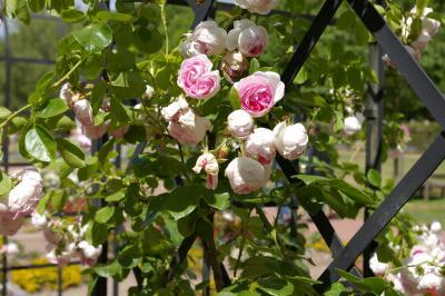 Foto zu Meldung: Fest um Wittstock und die Rosen am 7. Juli