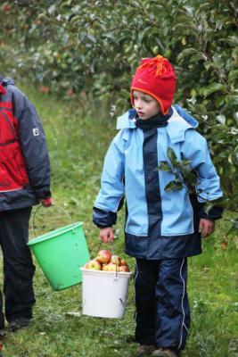 Foto zur Meldung: Apfel- und Waldprojekt