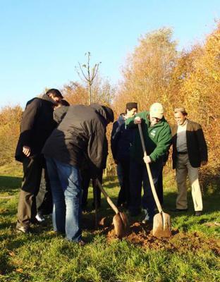 Foto zu Meldung: Schutzgemeinschaft Deutscher Wald, Ahmadiyya-Muslim-Jamaat Gemeinde und Bürgermeister Jan Fischer pflanzen Bäume des Jahres