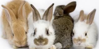 Foto zu Meldung: Satzung Tierseuchenkasse für 2014