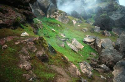 Lebensformen an geothermischen Stätten in der Eiszeit (Pete Convey, Spiegel Online)