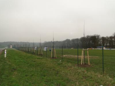 Foto zu Meldung: Baumpflanzung
