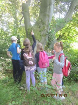 Foto zur Meldung: Ein lehrreicher Tag im Wald