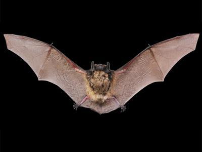 Foto zu Meldung: Zehn Fledermausarten in Fichtenwalde nachgewiesen