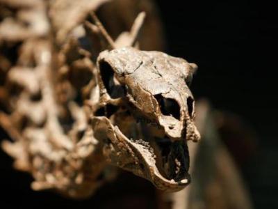 150 Millionen Jahre alter Stegosaurus aus dem Zeitalter des Jura