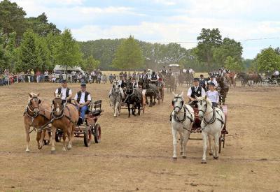 Beim Reiterfest in Oschätzchen boten die RSG Oschätzchen und der FRV Lindena auch Vorführungen mit Zweispännerquadrillen. Foto: M. Sattler/sam1