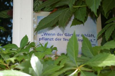 Foto zu Meldung: Es reicht nicht zu pflanzen, man muss auch pflegen