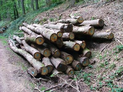 Vorschaubild zur Meldung: Brennholz-Bestellungen