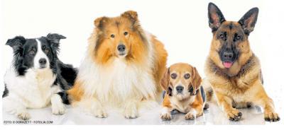 Foto zur Meldung: Steuersünder kommen doch noch auf den Hund