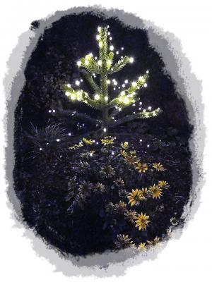 Foto zur Meldung: leuchtender Baum