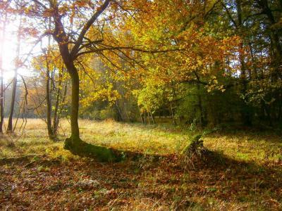Foto zur Meldung: Ein kleiner Gruss aus Wusterhausen/Dosse am Hubertustag 2014