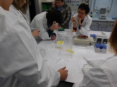 Foto zur Meldung: Biologieunterricht im Labor