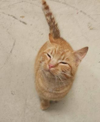 Foto zur Meldung: Wer vermiest seine Katze?