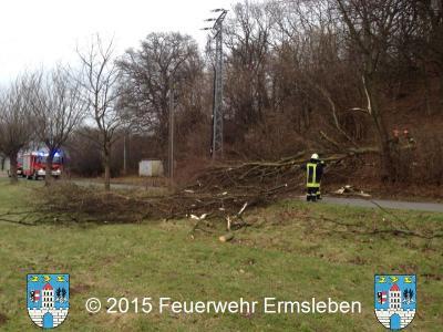 umgestürzter Baumin der Konradsburger Straße