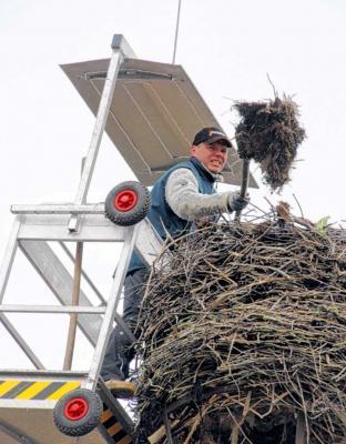 Foto zur Meldung: Dachdecker mistet Adebars Wohnstube aus