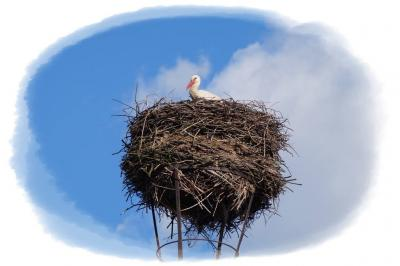Foto zur Meldung: Der Storch ist da!