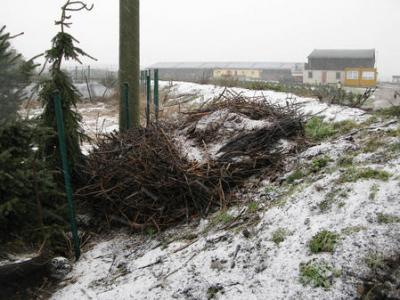 Der Horst liegt zerstört zu Füßen des alten Strommasts.