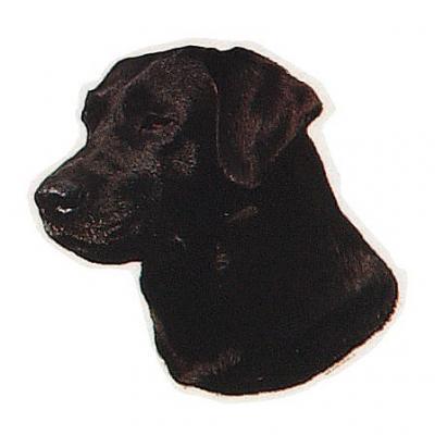 """Vorschaubild zur Meldung: Unser Therapie-Hund """"CORA"""""""