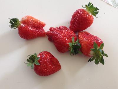erste Erdbeeren 2015